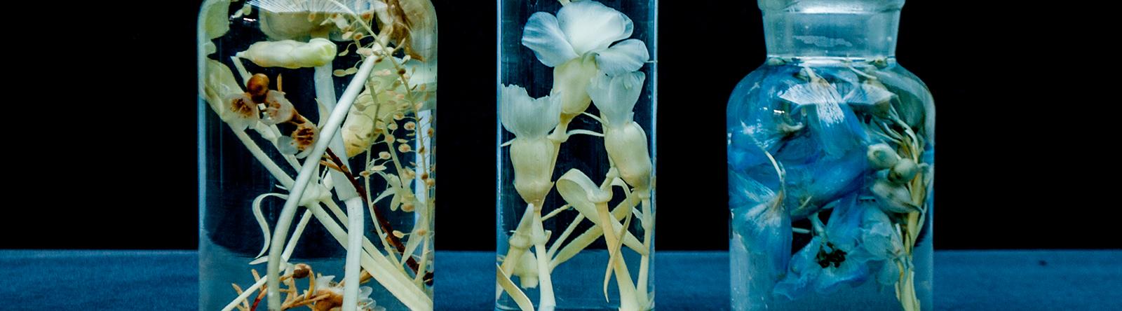 Tentoonstelling Fleur des dames